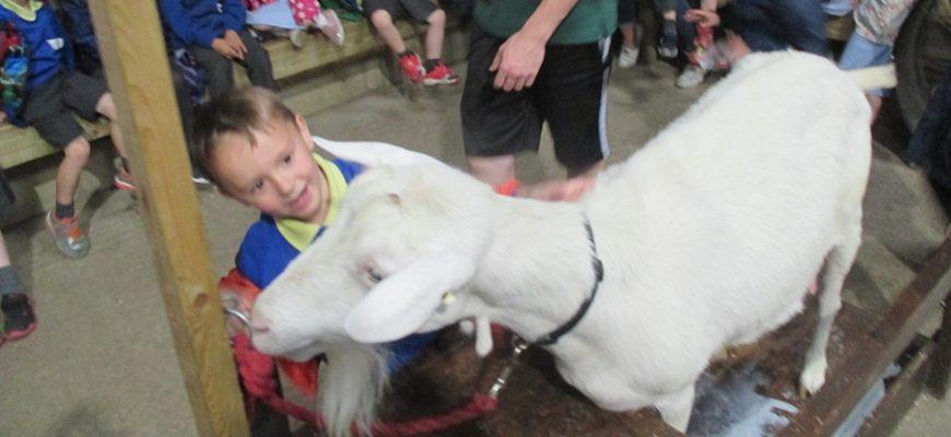 Reception Visit Bocketts Farm