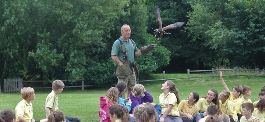 Henfold Birds Of Prey!
