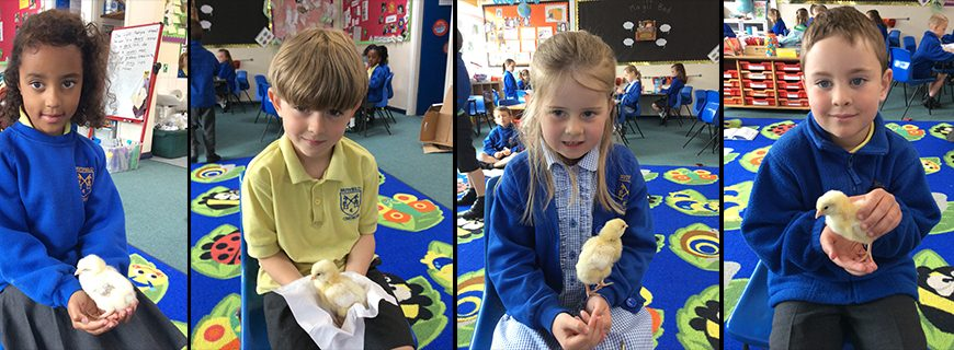 Outdoor Learning – New arrivals